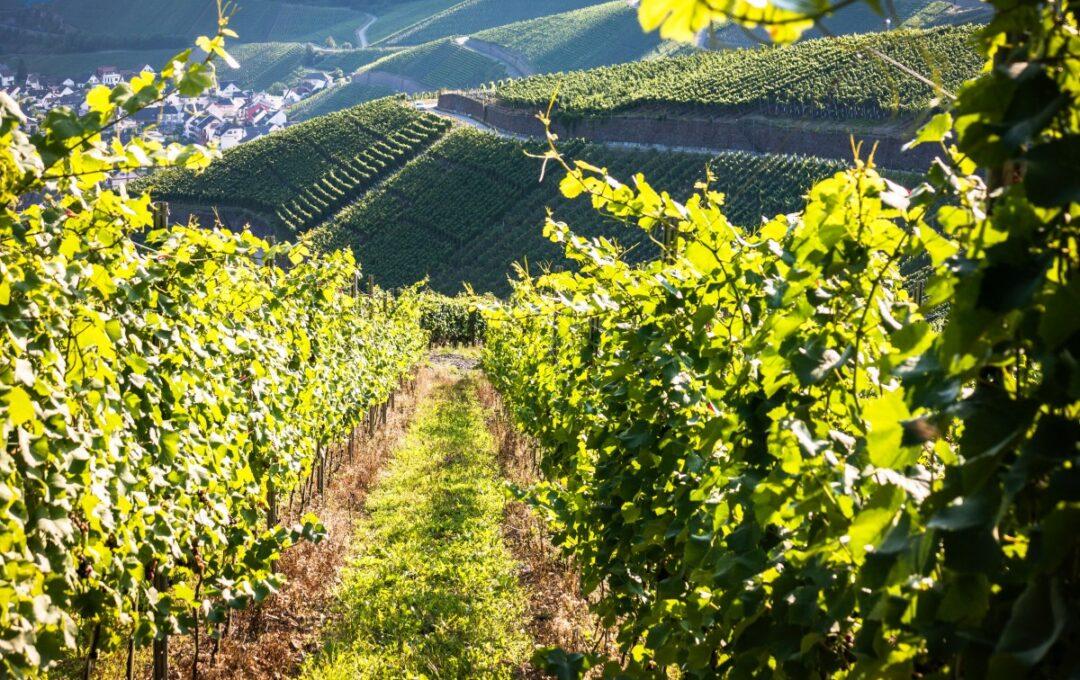 investir dans les vignobles grâce aux GFV