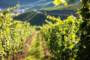 L'investissement plaisir dans le vin grâce aux GFV: vous connaissez?