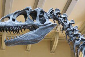 Light painting : les carcasses de dinosaures de Darren Pearson